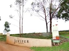Juniper1
